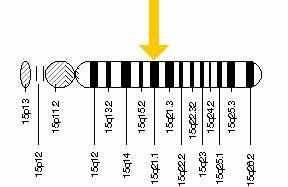FBN1 gene diagram